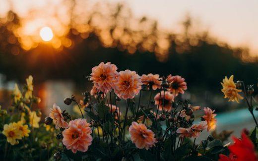 """Blommor - människans bästa """"växtvän""""?"""